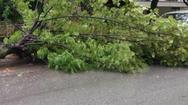 Πάτρα - Οι άνεμοι έριξαν δέντρο στο Ρίο!