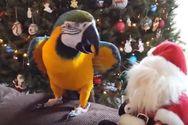 Κατοικίδια εναντίον… Χριστουγέννων (video)