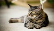 Αγία Παρασκευή - Σκότωσαν γάτα με αεροβόλο (pic)