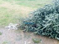 Έκοψαν με αλυσοπρίονο Χριστουγεννιάτικο δέντρο στη Ναύπακτο (video)