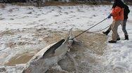 ΗΠΑ: Πάγωσαν μέχρι θανάτου και οι καρχαρίες