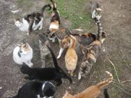 Δεκάδες γατάκια μόνα και εγκαταλελειμμένα στο κρύο, στην Πλαζ της Πάτρας (pics)
