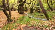 Το γραφικό Πλανητέρο 'κρυμμένο' μέσα στα πλατάνια... (pics+video)
