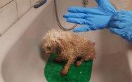 Ουγγαρία - Σκυλίτσα καθόταν για δύο εβδομάδες δίπλα στο πτώμα της ιδιοκτήτριας της
