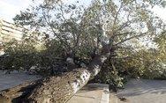 Λάρισα - Πτώσεις δέντρων από την κακοκαιρία