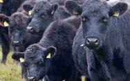 Καταδικάστηκε για σεξουαλική κακοποίηση… αγελάδων στην Αγγλία