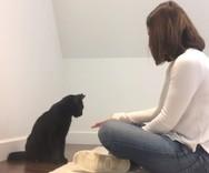 Μια ιδιαίτερη χειραψία μεταξύ μιας γυναίκας με μία γάτα (video)