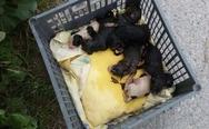 Πάτρα: Πέταξαν σε χωράφι νεογέννητα σκυλάκια