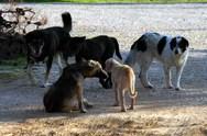 Αποσύρθηκε η τροπολογία για τα αδέσποτα ζώα