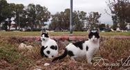 Γάτες και σκύλοι απολαμβάνουν τη βόλτα τους στο Νότιο Πάρκο της Πάτρας! (video)