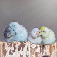Πουλιά ποζάρουν στο φακό! (φωτο)