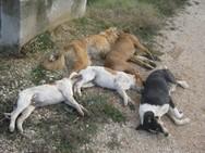 Νέα περιστατικά θανάτωσης ζώων σε Ηλεία και Αιτωλοακαρνανία!