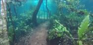 Ένα... υποβρύχιο τροπικό δάσος (video)