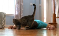 Άνδρας προσποιείται πως πέθανε για να δει πως θα αντιδράσει η γάτα του (video)