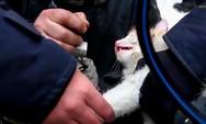 Πυροσβέστες κάνουν καρδιοαναπνευστική αναζωογόνηση σε λιπόθυμο γατάκι (video)