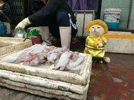Ο γάτος που... πουλάει ψάρια και λαχανικά στο Βιετνάμ (φωτο)