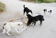 Ηλεία - Προσπάθησαν να σκοτώσουν τρία σκυλιά ρίχνοντάς τους δηλητηριασμένη τροφή