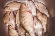 Ένας διαφορετικός τρόπος για να καθαρίσεις ψάρια (video)