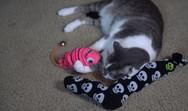 Πρακτικά κόλπα που κάνουν τη ζωή με μια γάτα πιο εύκολη (video)