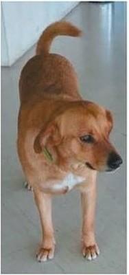 Πάτρα: Η Μόνα, η αδέσποτη σκυλίτσα που βρήκε ένα χαμένο πορτοφόλι!