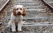 Οι αλλαγές που έρχονται στις υιοθεσίες αδέσποτων ζώων