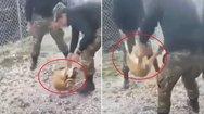 «Συγγνώμη» ζητούν οι νεαροί που βασάνισαν σκύλο στην Κόνιτσα