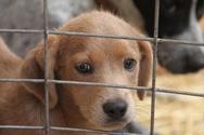 Η κυβέρνηση αποσύρει το νομοσχέδιο για τα ζώα