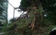 Πάτρα: Τεράστιο δέντρο έκλεισε το δρόμο στην Αρόη