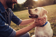 Ανάσταση: Τι πρέπει να κάνετε αν ο σκύλος σας φοβάται τα βεγγαλικά