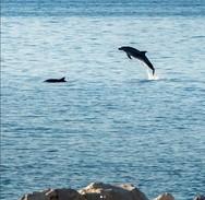 Τα δελφίνια, ο καλύτερος οιωνός για το πανευρωπαϊκό πρωτάθλημα της Πάτρας! (pics+vids)