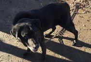 Ηλεία: Eγκατέλειψαν δεμένο σκύλο με αλυσίδα σε σχολείο της Αμαλιάδας