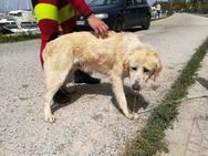 Πάτρα: Σκύλος βρέθηκε στον κυματοθραύστη - Τον μάζεψαν οι εθελοντές του ΕΕΣ (pics)