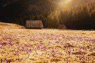 Η άνοιξη μεταμορφώνει τα βουνά της Σλοβακίας σε τοπία μαγικά (φωτο)