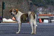 Δυτική Ελλάδα - Άγνωστος αποπειράθηκε να δηλητηριάσει σκύλο