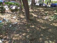 Χόρτα και σκουπίδια σε πλατεία, δίπλα από σχολείο της Πάτρας (pics)