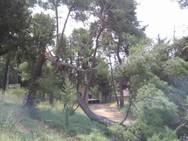 Προσοχή: Δέντρα είναι έτοιμα να πέσουν στο δρόμο στο Γηροκομειό της Πάτρας (pics)