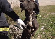 Αχαΐα - Άφησε σκύλο δεμένο σε ελιά να πεθάνει από ασιτία