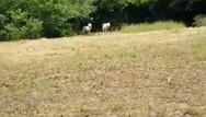Οι λευκοί λύκοι του Αρκτούρου (video)