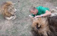 Οι τρυφερές στιγμές ενός άνδρα με... λιοντάρια (video)