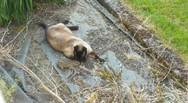 Κουνέλι ξεφεύγει από τα δόντια γάτας, αλλά... (video)
