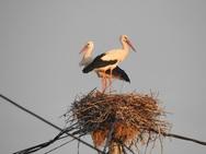 Αχαΐα - Τα νέα των πουλιών στο Εθνικό Πάρκο Υγροτόπων Κοτυχίου - Στροφυλιάς (φωτο)