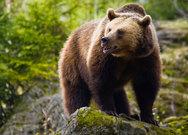 Αρκούδα έφτιαξε φωλιά σε αυλή σπιτιού στη Φλώρινα