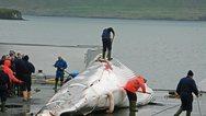Ιάπωνες αλιείς σκότωσαν 333 φάλαινες μινκ στην Ανταρκτική