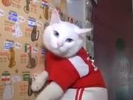 Μετά το χταπόδι, έρχεται ο γάτος - μάντης Αχιλλέας για το Μουντιάλ 2018 (video)