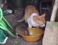 Ποντίκι 'δείχνει' σε γάτα ποιος είναι το αφεντικό (video)