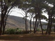 Περπατώντας στο δάσος της Στροφυλιάς και στην ακροθαλασσιά της Καλόγριας (pics)