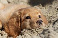 Νέο κρούσμα δηλητηρίασης σκύλων στην Πάτρα - 'Βροχή' πέφτουν οι φόλες στις γειτονιές