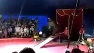 Ρωσία: Εξαγριωμένη αρκούδα επιτέθηκε σε θηριοδαμαστή (video)