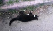 Νεκρές γάτες και περιστέρια από φόλες στην Πάτρα