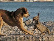 Οι σκύλοι ή οι γάτες είναι πιο έξυπνα ζώα;